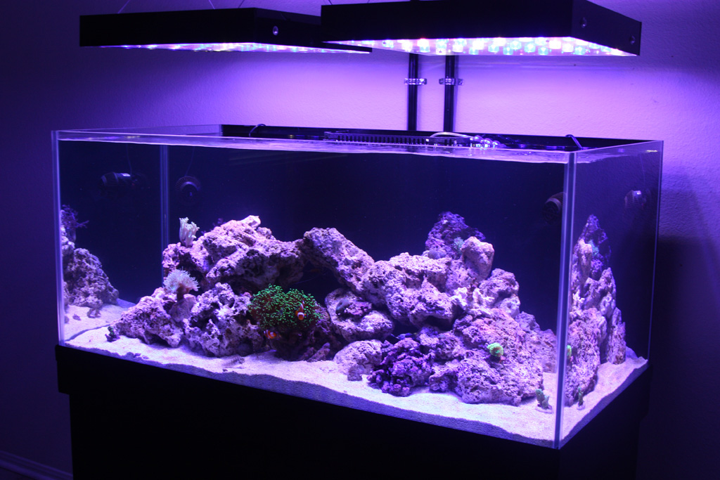 Dsa 105 neo rimless reef page 4 for Rimless fish tank